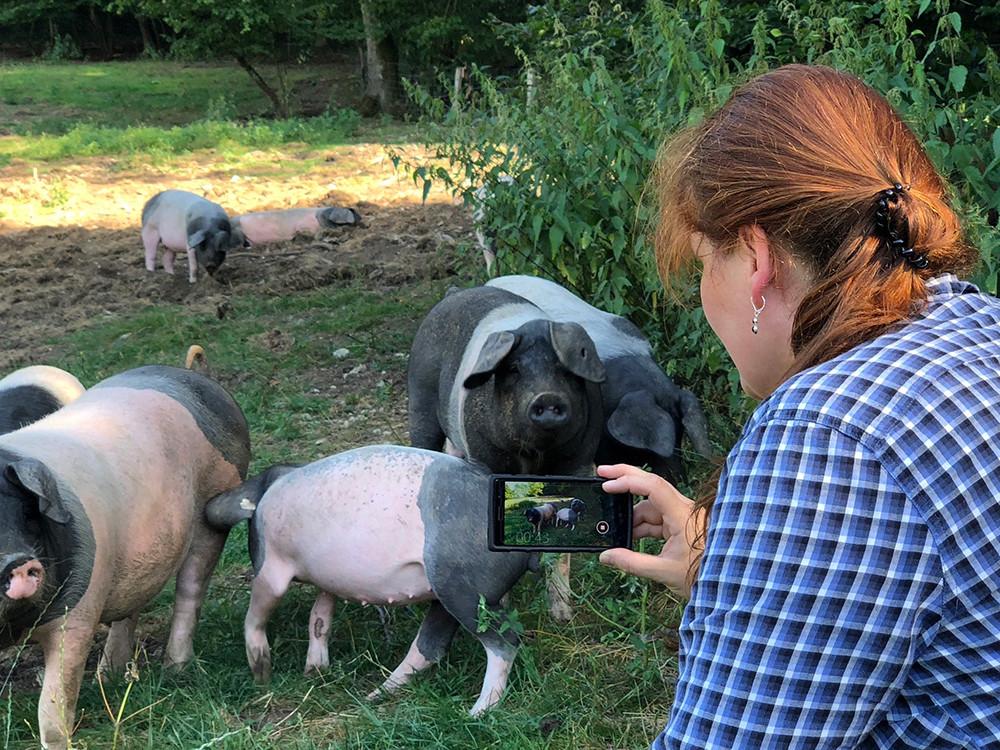 Beschäftigung für Schweine gesucht