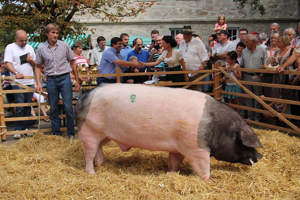 Zuchtschweine beim Hoffest