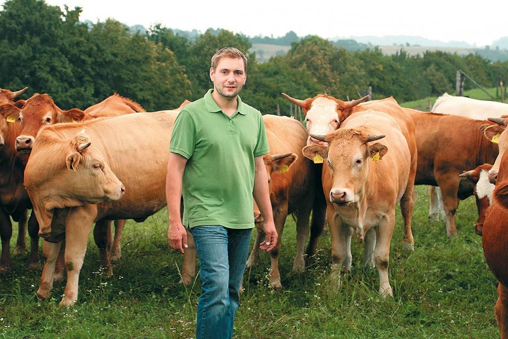 Auf der Rinderweide