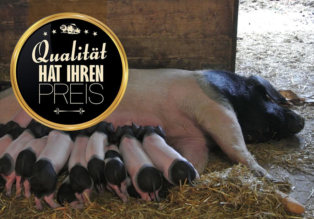 Serie (5): Ein Schweineleben