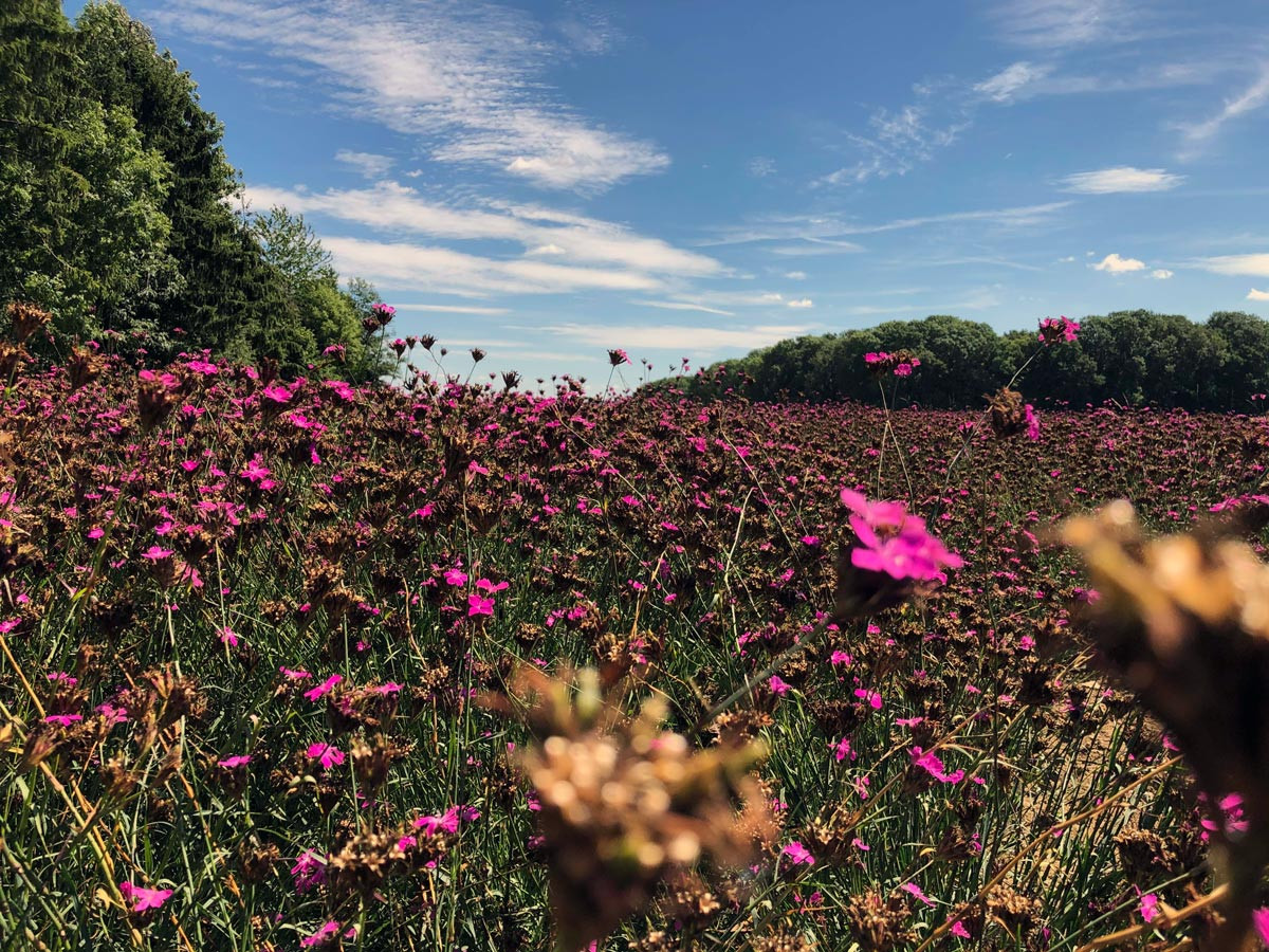 Regionale Wildsamen vermehren