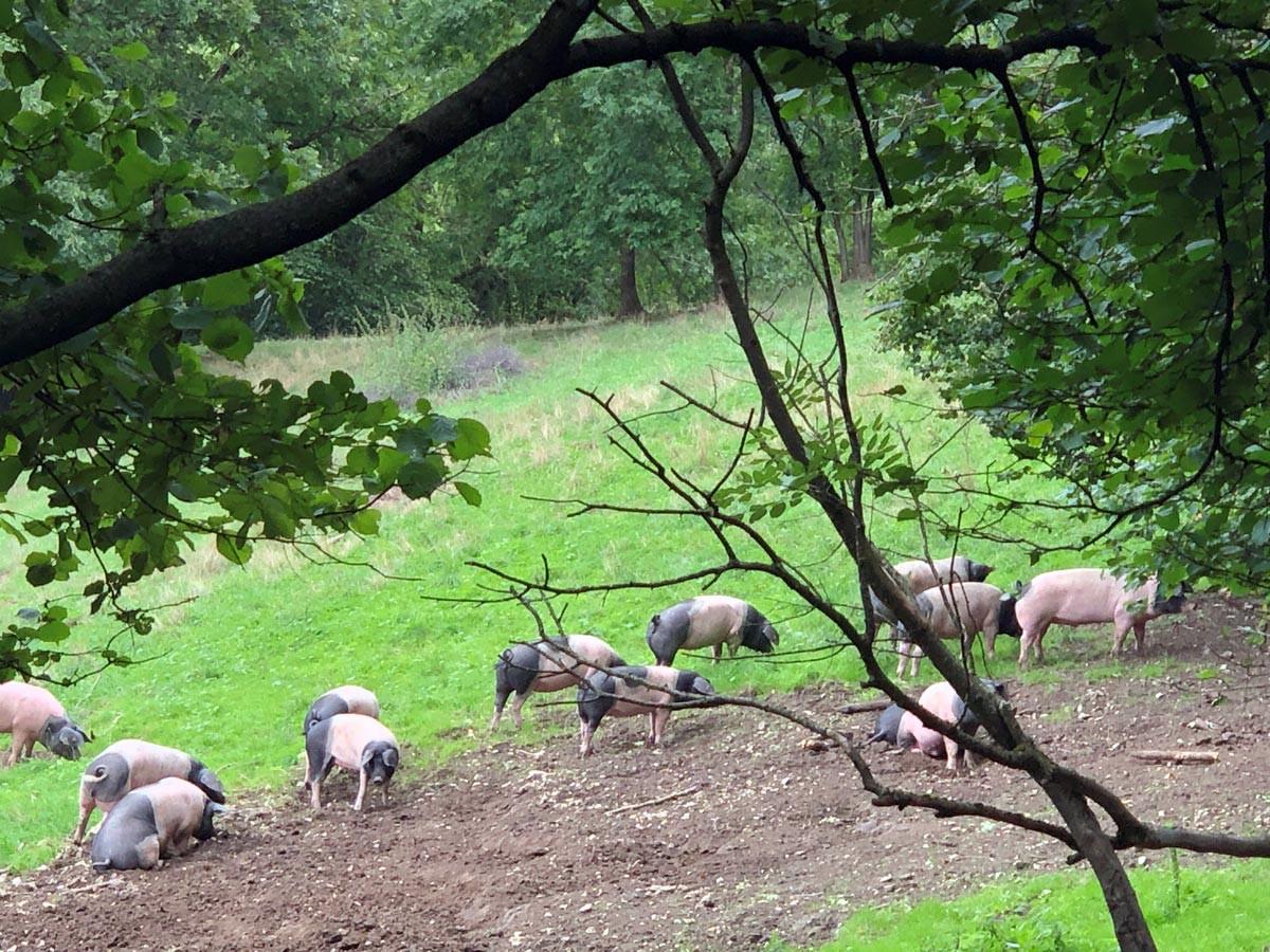 Kontrollgang auf der Schwäbisch-Hällischen Schweineweide